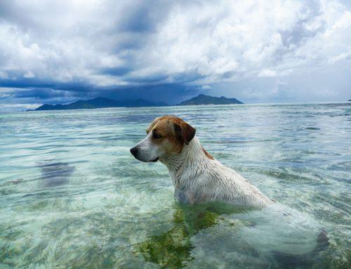 Hunde der Seychellen