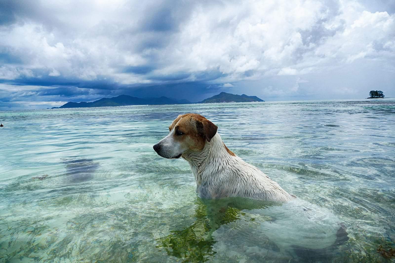 Hunde auf den Seychellen