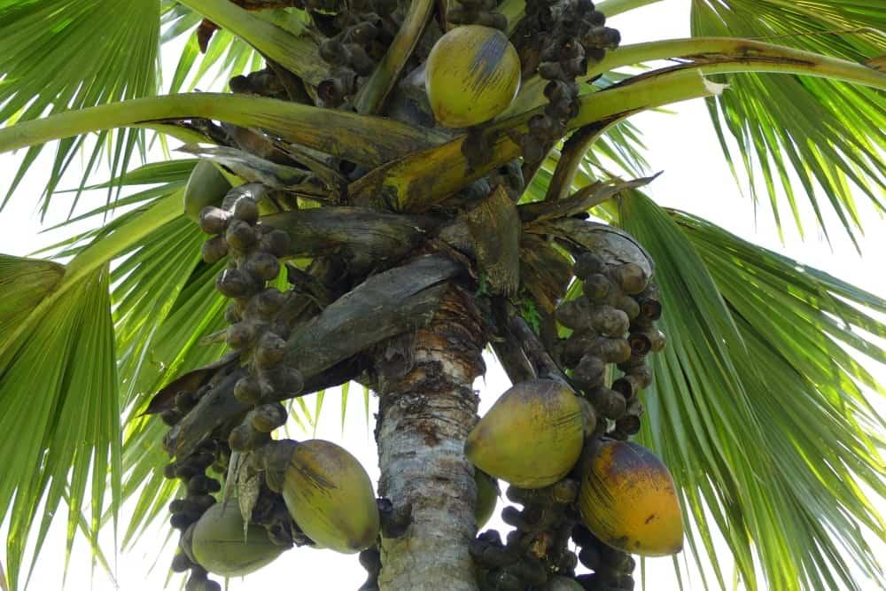 seychellen-bilder-019
