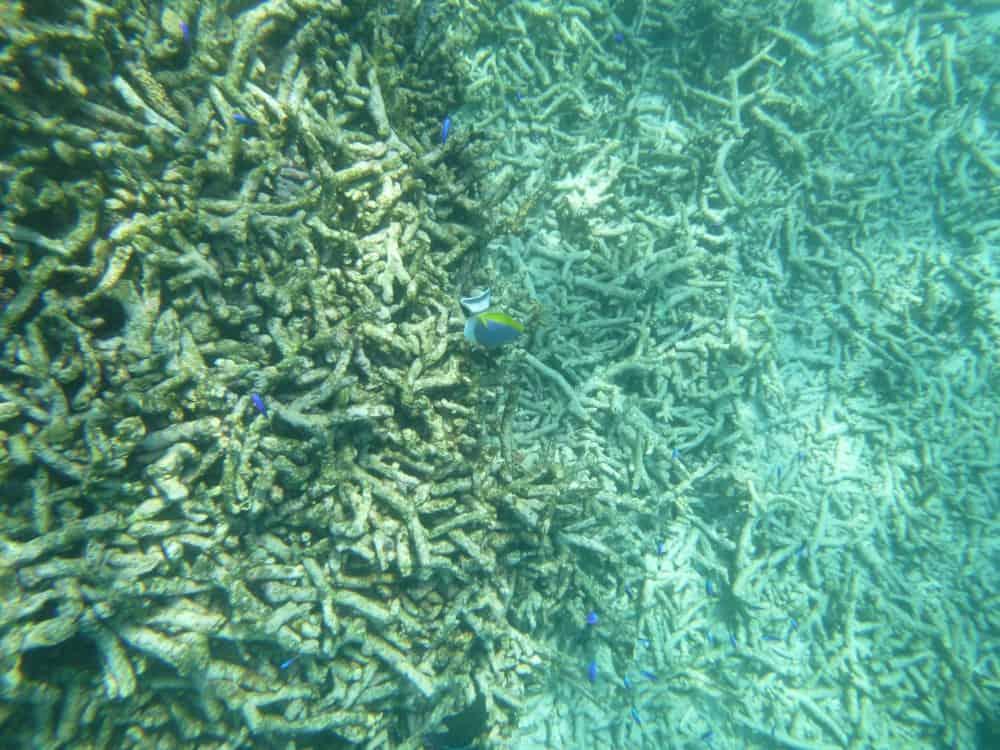 seychellen-bilder-061
