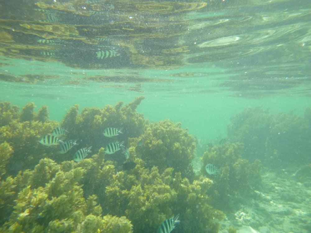 seychellen-bilder-187