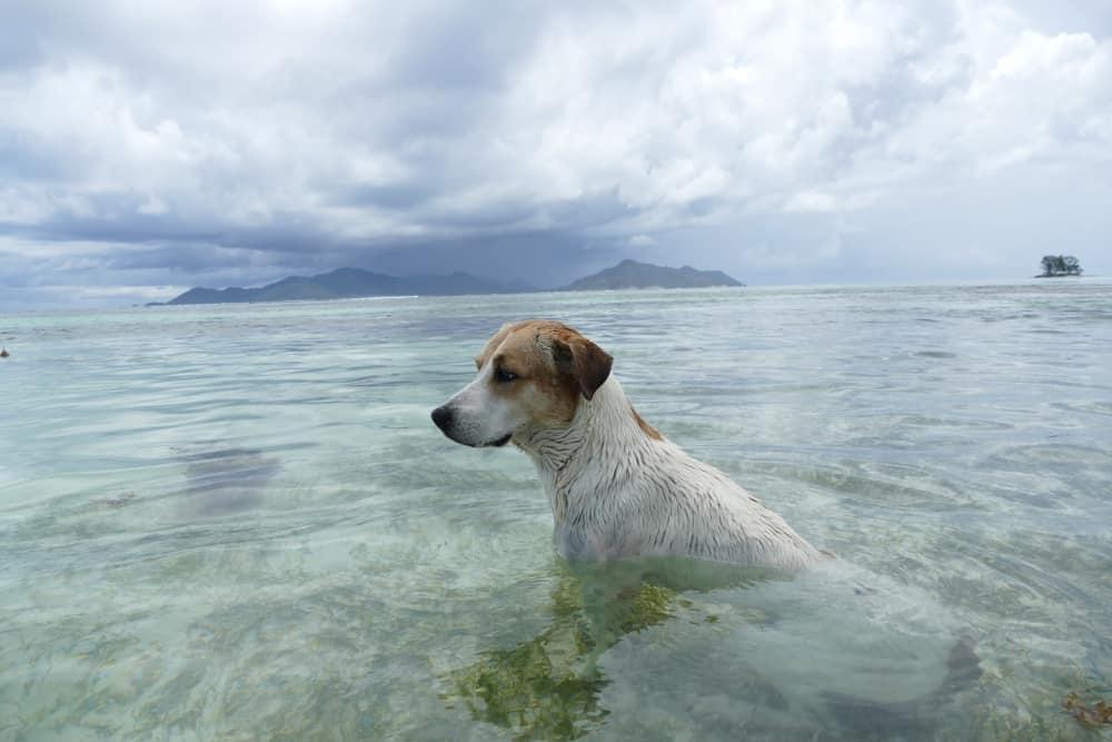 Seychellen Hunde
